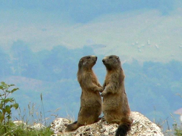 les marmottes vous saluent